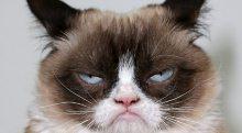 Grumpy cat на $100 миллионов