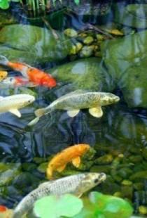 Уход за прудом и его обитателями круглый год